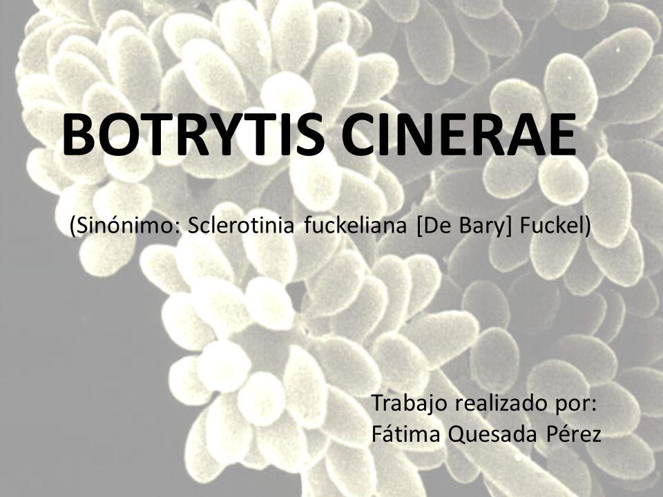 BOTRYTIS CINERAE (Sinónimo: Sclerotinia fuckeliana [De Bary] Fuckel)